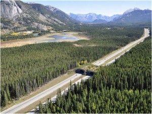 Puente verde para cruce de animales sobre carreteras