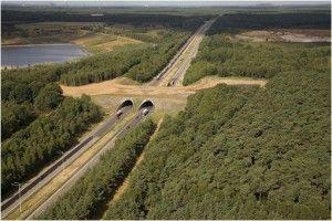 Puente verde sobre carretera para el tránsito de animales
