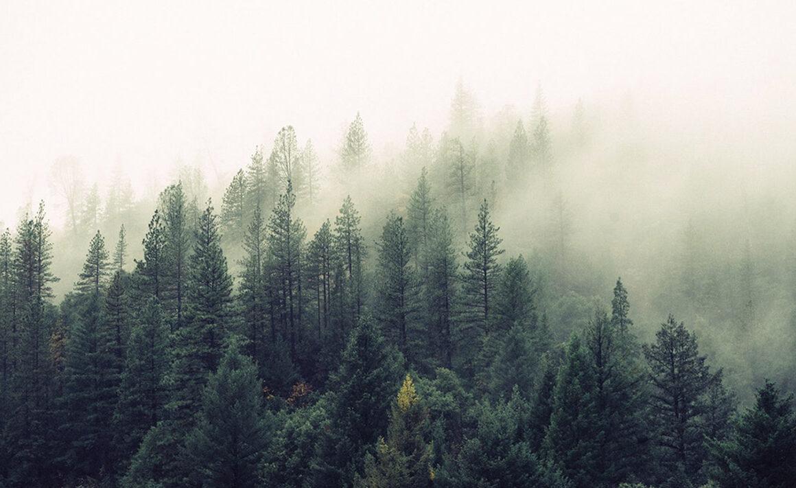 Forestapp - Ayudemos al planeta