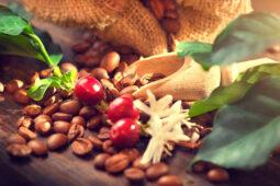 La esencia sostenible del café de Comercio Justo