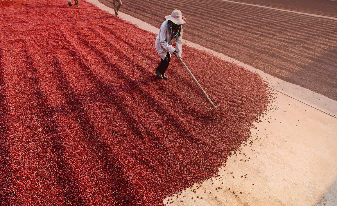 Mejora el mundo cada día con tu café Fairtrade