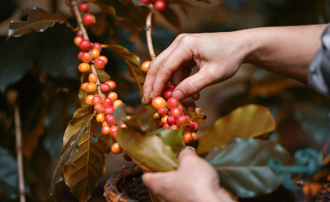 Octubre es el mes del café de Comercio Justo