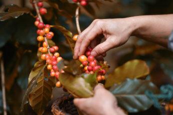 Un café justo para productores y consumidores