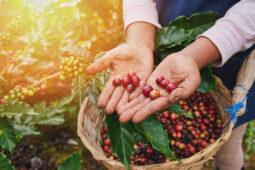 ¿Quién produce el café de Comercio Justo?