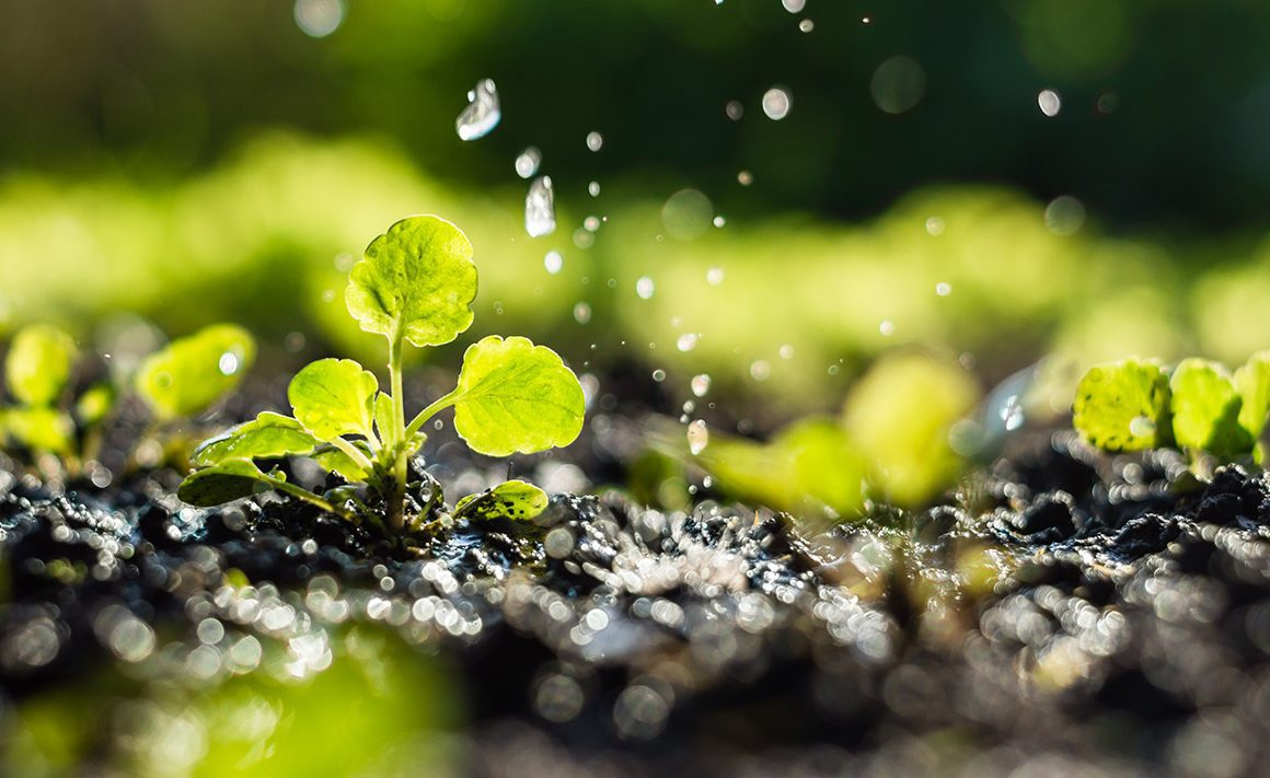 El Día Mundial del Medio Ambiente comienza la cuenta atrás para salvar el planeta