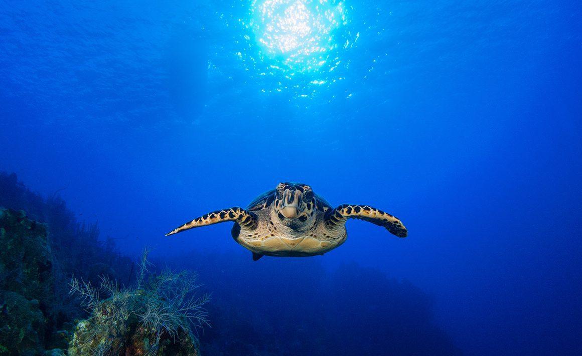 Lánzate a la búsqueda del coral el Día Mundial de los Océanos