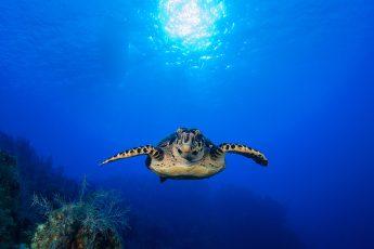 Dia Mundial de los Océanos